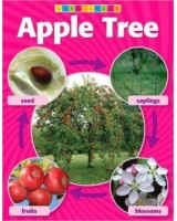 Apple Tree Life Cycle Photo Chart