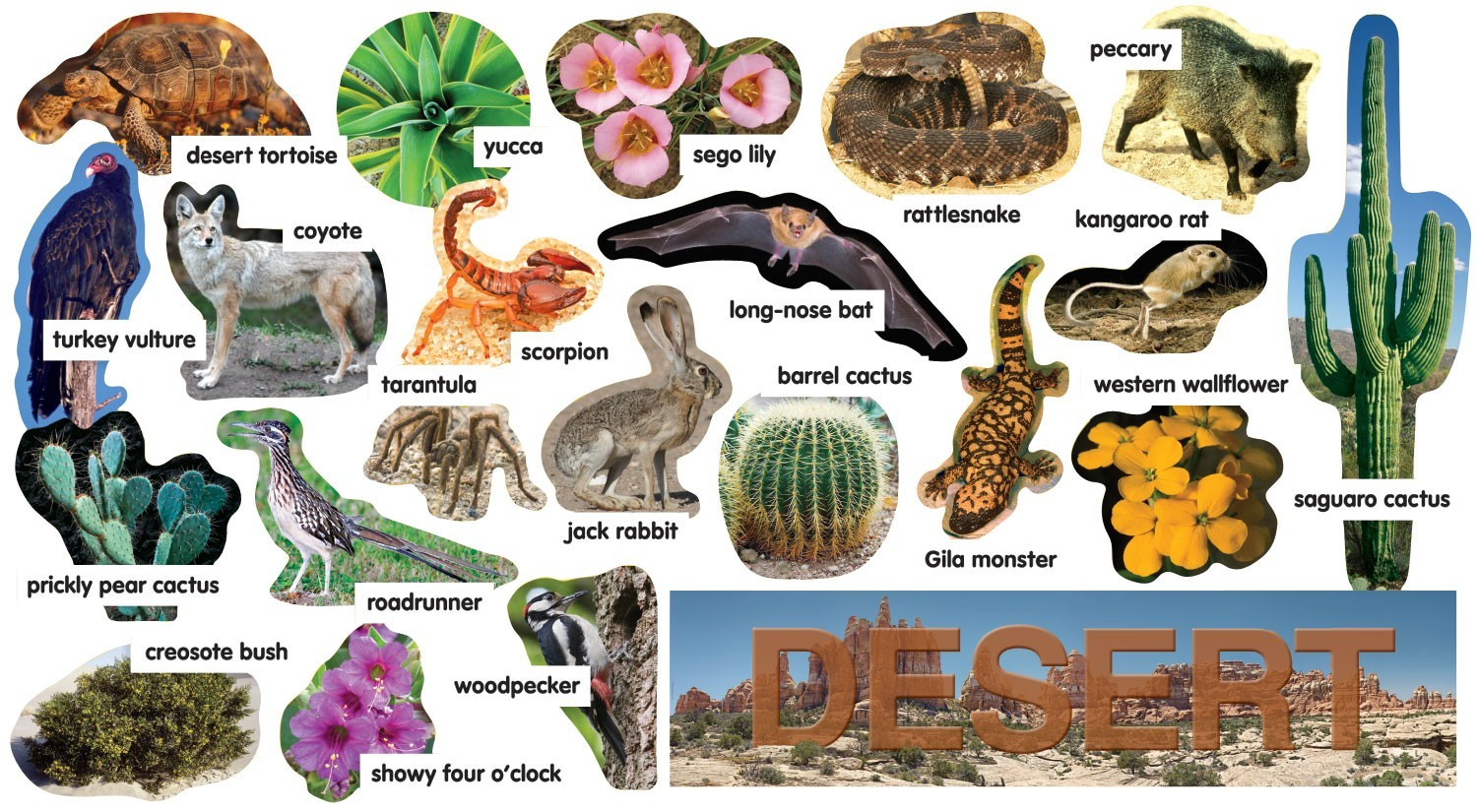 deserts animals and plants -#main