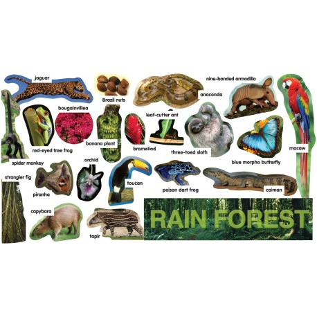 Rainforest Plants & Animals