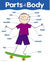 Parts of the Body Basic Skills Chart