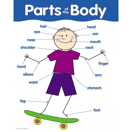 Parts of the body chart