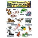 Plant and Animal Adaptations - CTP1771