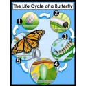 Life Cycle of a Butterfly Poster