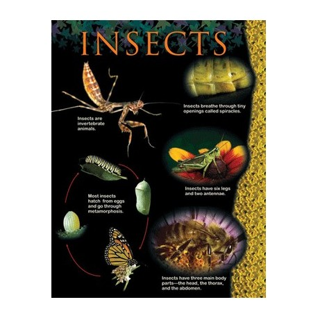 Insects Animal classification