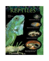Reptiles Animal classification