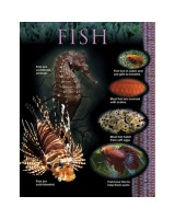 Fish Animal classification