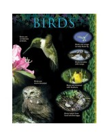 Birds Animal Classification