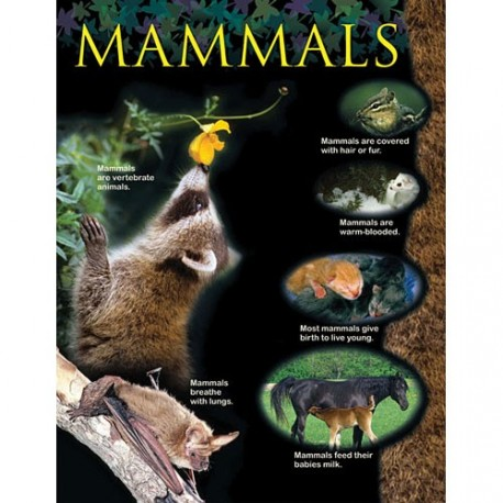 Mammals Animal Classification