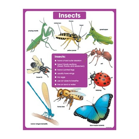 Insects CD6384