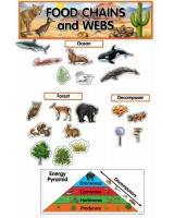 Food Chains & Webs Mini Bulletin Board Set