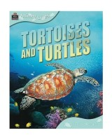 Animal Lives: Tortoises and turtles