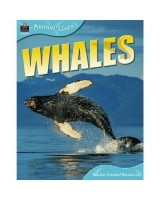 Animal Lives: Whales