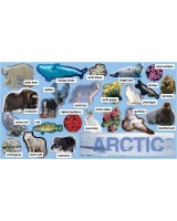 Artic plants and animals